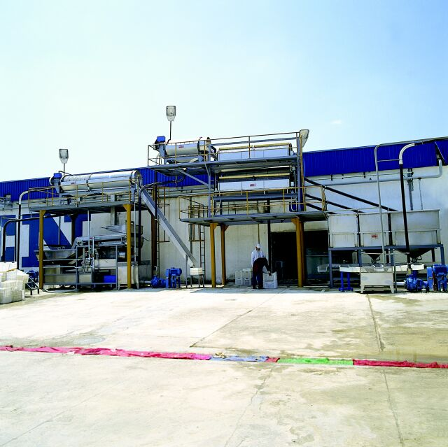 Pea Processing Line